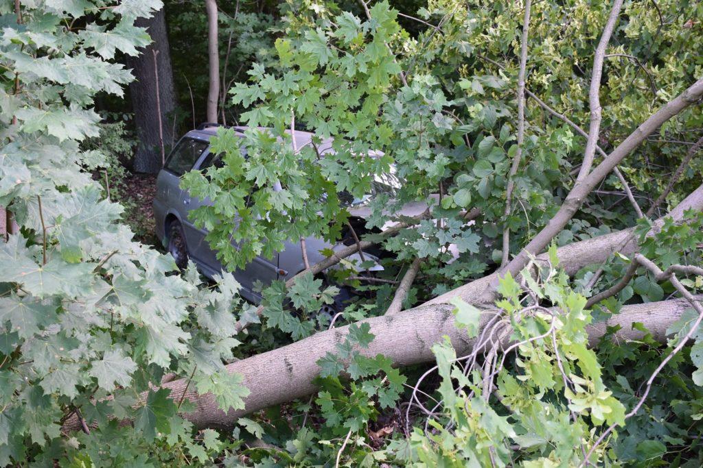 Potrącenie i uderzenie w drzewo